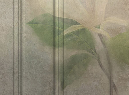 Kaufen Designer Fototapeten Venice Magnoly Beispiel sumpfig | 3d tapeten