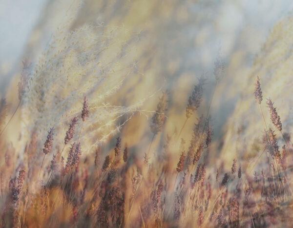 Design Fototapeten Clarity Autumn Beispiel | fototapete natur