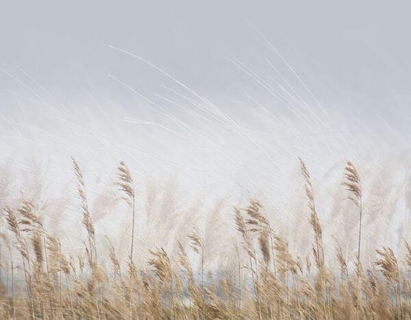 Design Fototapeten Clarity Gold Beispiel standart | fototapete natur