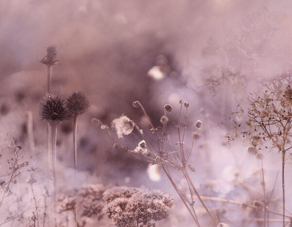 Design Fototapeten Clarity Spring Beispiel rosa | fototapete natur