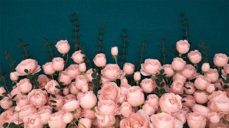 Design Fototapeten 3D Rosa Inglesa Sapphirine Beispiel blau | fototapete natur