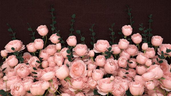 Design Fototapeten 3D Rosa Inglesa Sapphirine Beispiel braun | fototapete natur