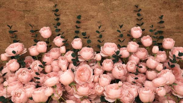 Design Fototapeten 3D Rosa Inglesa Sapphirine Beispiel hellbraun | fototapete natur