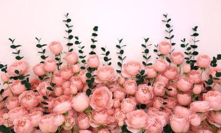 Designer Fototapeten 3D Rosa Inglesa White Beispiel | 3d tapete