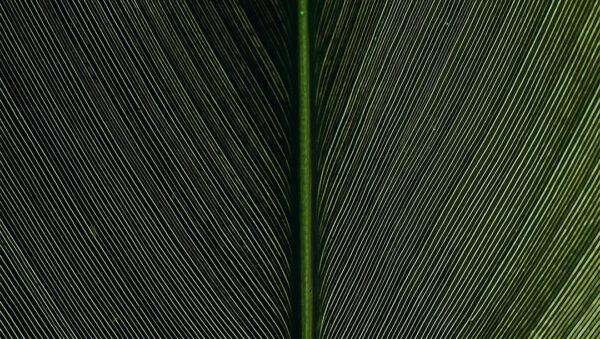 Kaufen Designer Fototapeten Strutturato Green Leaf Beispiel | 3d tapeten