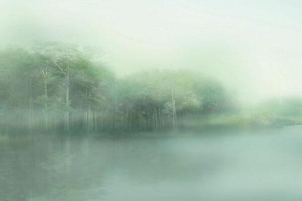 Design Fototapeten Foggy Forest Beispiel Grün   fototapete natur