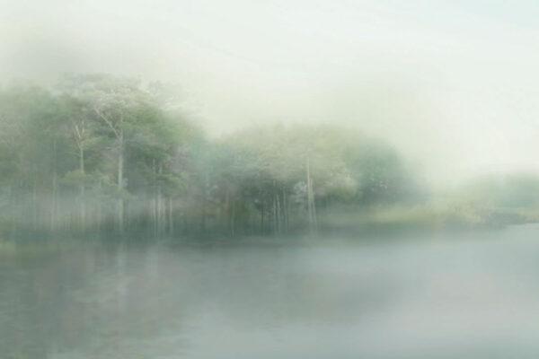 Design Fototapeten Foggy Forest Beispiel grau   fototapete natur