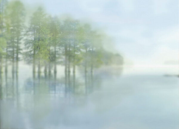 Fototapeten Foggy Forest Dream Beispiel seifiger Blick | 3d fotapeten