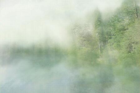 Kaufen Designer Fototapeten Foggy Forest Cyan Beispiel | fototapete wald