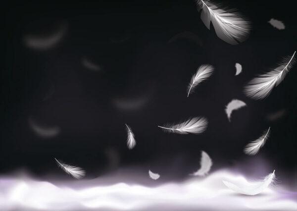 Design Fototapeten Zizz Beispiel grau dunkle Farbe | fototapete natur