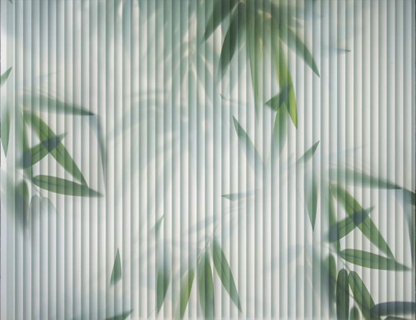 Fototapeten Geheimnis Beispiel Grüntöne | 3d fototapeten